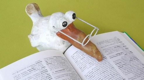 Lernender Vogel